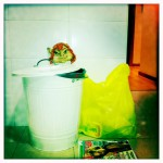 Puri: En el cubo la bolsa de orgánica, aparte la bolsa para envases y los papeles en montoninos hasta que los llevamos al contenedor.  El aceite en un envase de plástico y pilas, cd´s, etc. esperan en un cajón a que los llevemos al punto limpio. Todo con mucho cuidado, porque ¡tenemos un duende que nos vigila!