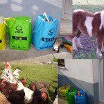 """Yuri: Tengo el kit de reciclaje para la selección de residuos, dependiendo de si son papel y cartón, envases,vidrio... En cuanto a los residuos orgánicos estamos construyendo una compostadora """"casera"""", pero tampoco nos corre demasiada prisa porque tenemos dos aliados estupendos LAS PITAS y KOLIN, que se encargan de """"reciclar"""" los restos vegetales, pan, frutas, sobras... Además Esther, mi madre, recicla gran parte del aceite usado para hacer jabón"""