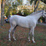 Berta: Un paseo en caballo, no hay mejor manera de relajarse y darte a ti mismo un regalazo: disfrutar con tu compañero de viajes de la naturaleza